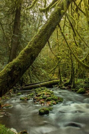 Rainforest landscape photography
