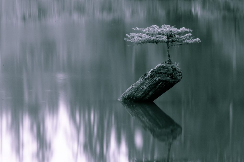 fairy lake bonsai tree vancouver island landscape photography