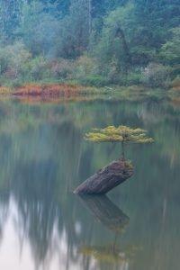Fairy Lake Vancouver Island landscape photography