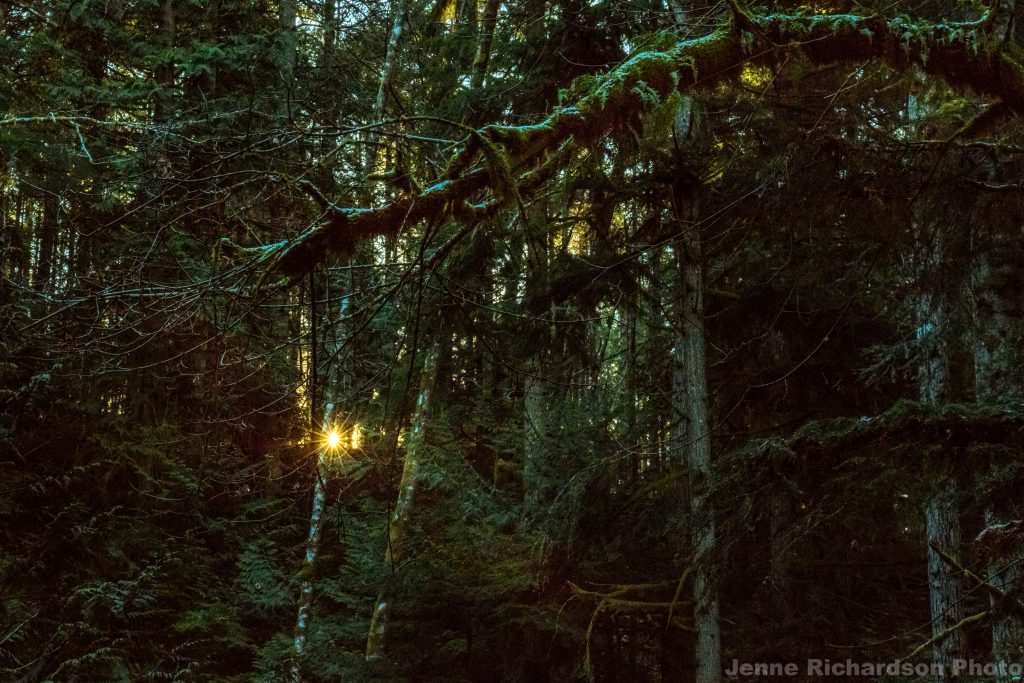 vancouver island landscape photography vancouver island photography tour