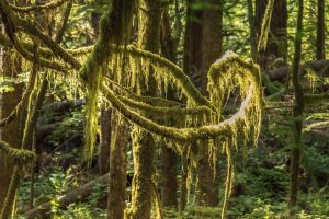woodland photography vancouver island