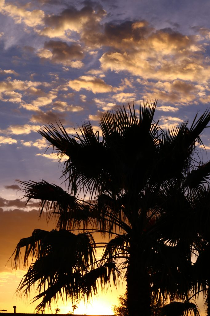 arizona american southwest photography palm tree