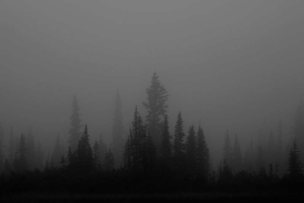 tonquin valley jasper national park canada black and white fog