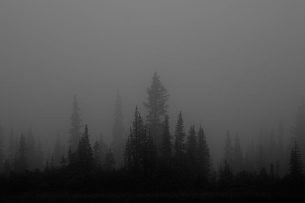 tonquin valley jasper national park canada black and white fog