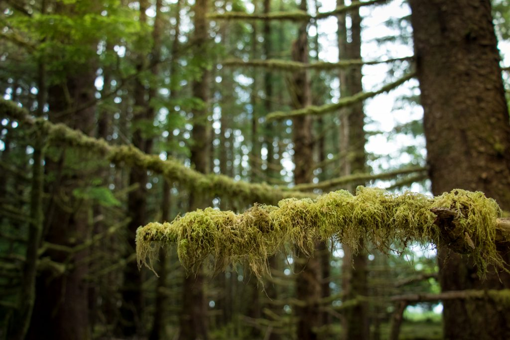 woodland photography tod inlet vancouver island