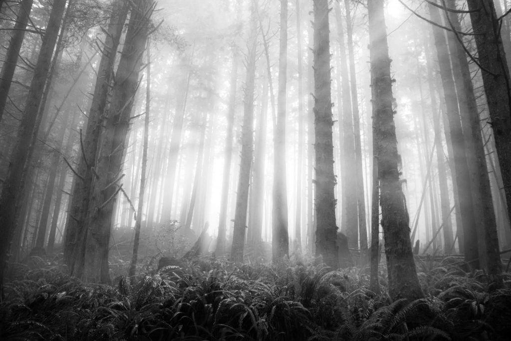 rainforests mystic beach vancouver island woodland photography