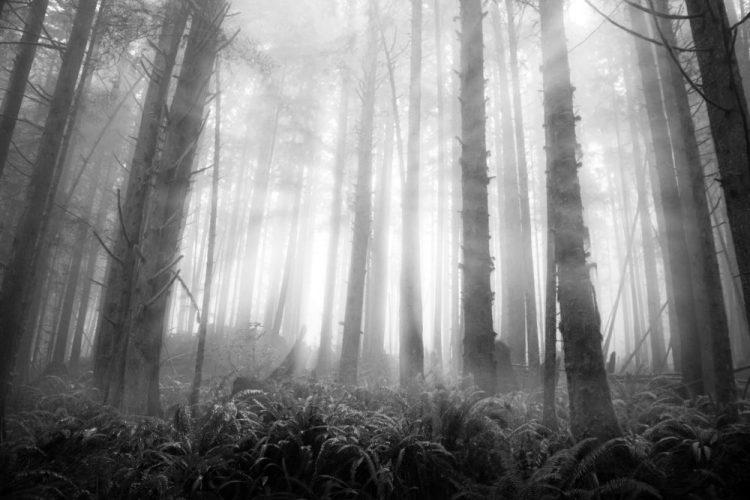 rainforests mystic beach vancouver island woodland photography