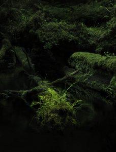 rainforest haida gwaii