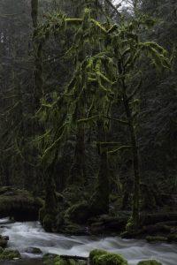rainforest vancouver island