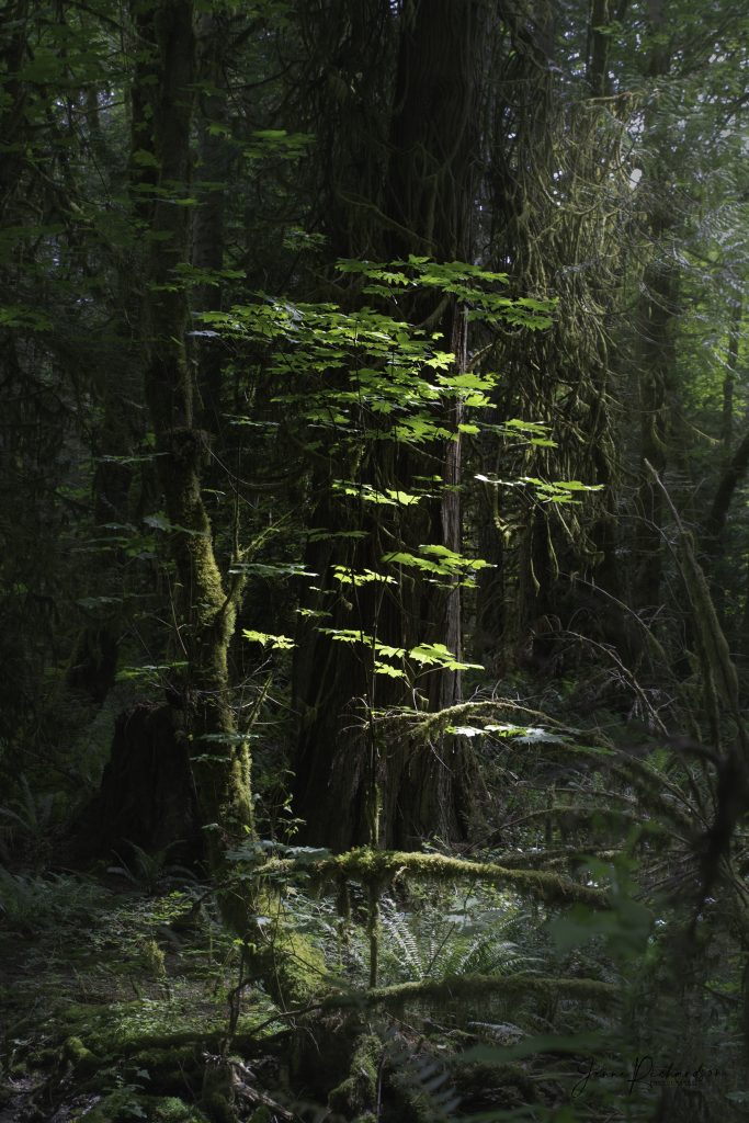 vancouver island rainforest woodland photography