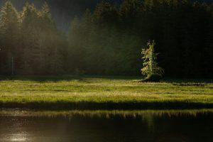 Tahsis Woodland Photography