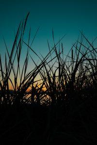 Sunset Grass Sidney Spit