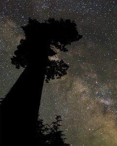 Big Lonely Doug Milky Way vancouver island photography port renfrew