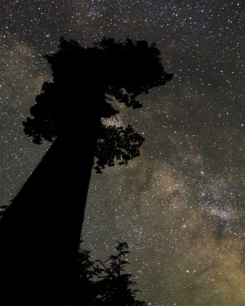 Big Lonely Doug Milky Way vancouver island photography port renfrew