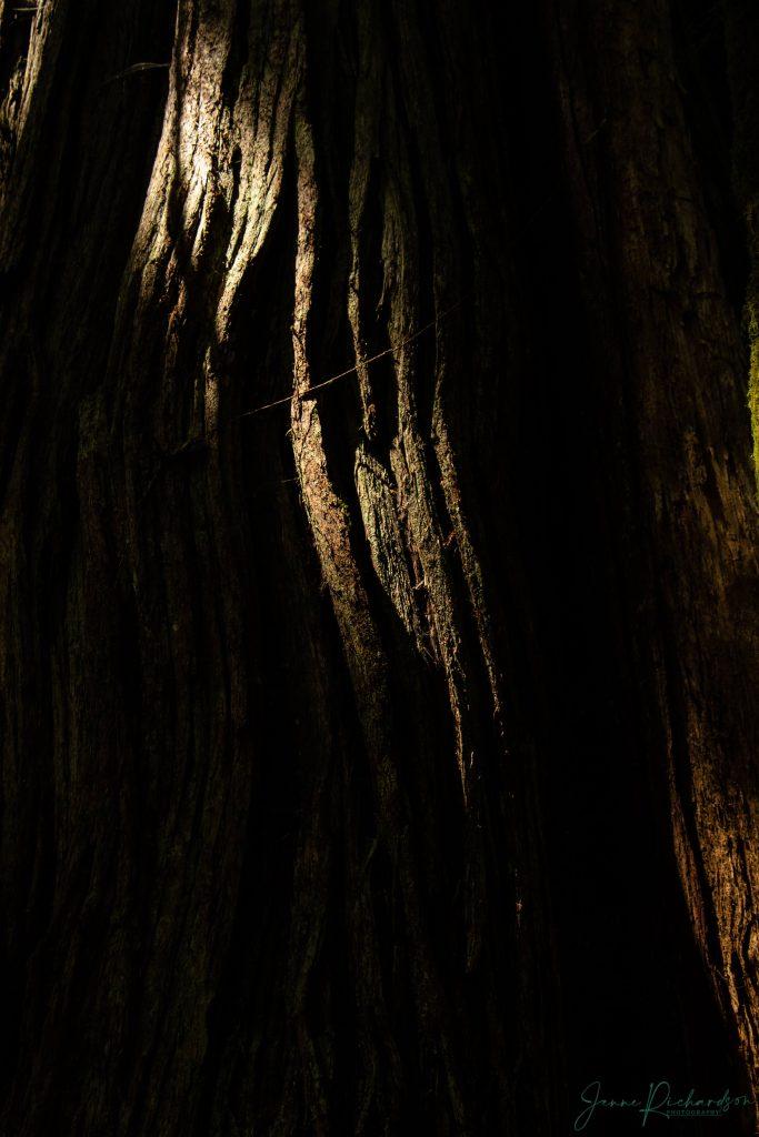 woodland photography vancouver island eden's grove