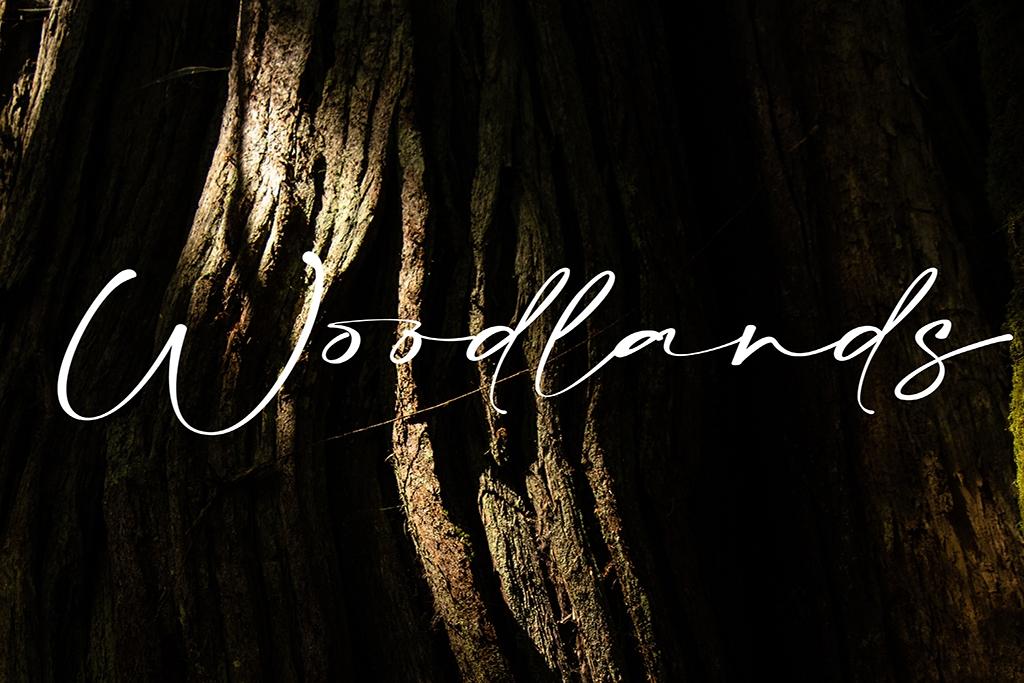 vancouver island rainforest woodland photography