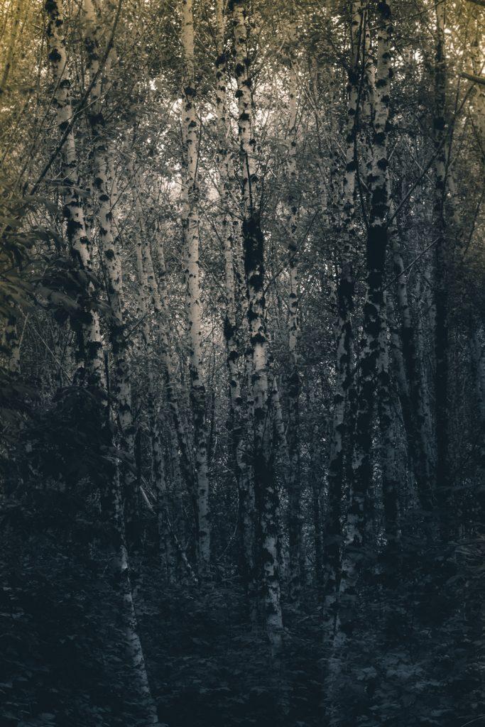 vancouver island photography blog tahsis woodland photography