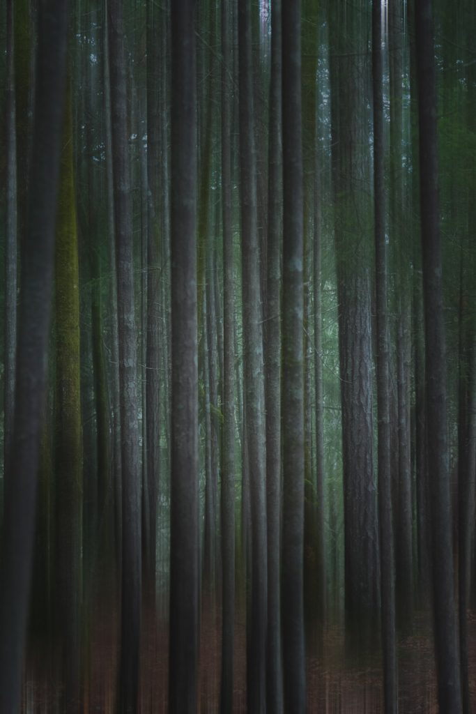 vancouver island photography blog Woodland Photography Abstract