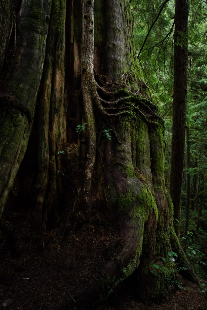 vancouver island rainforest woodland photography carmanah walbran