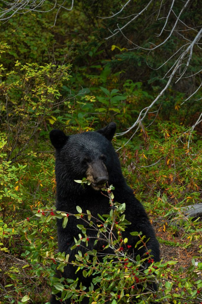 Banff National Park Photography and Yoho National Park
