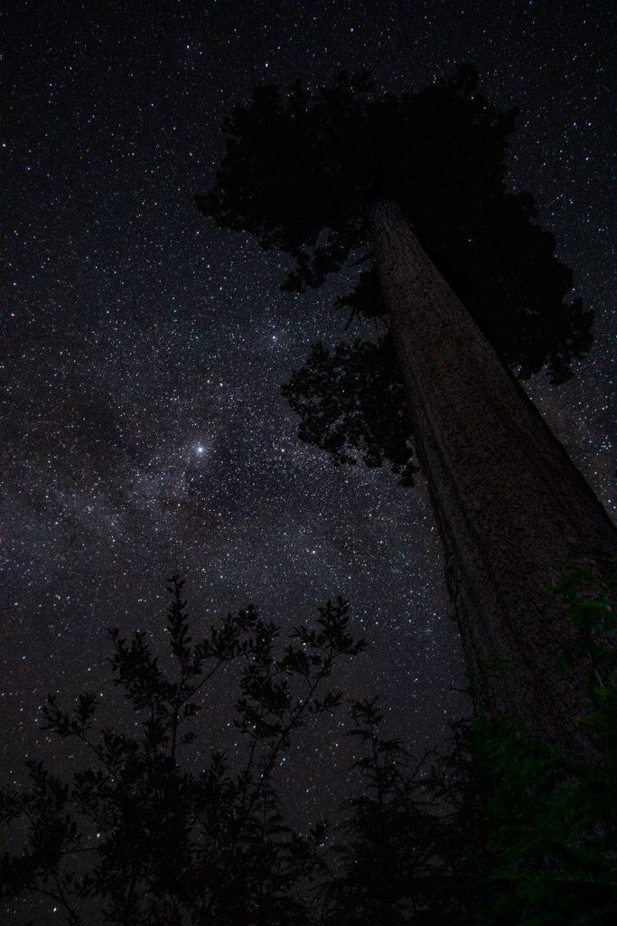 big lonely doug astrophotography vancouver island canada