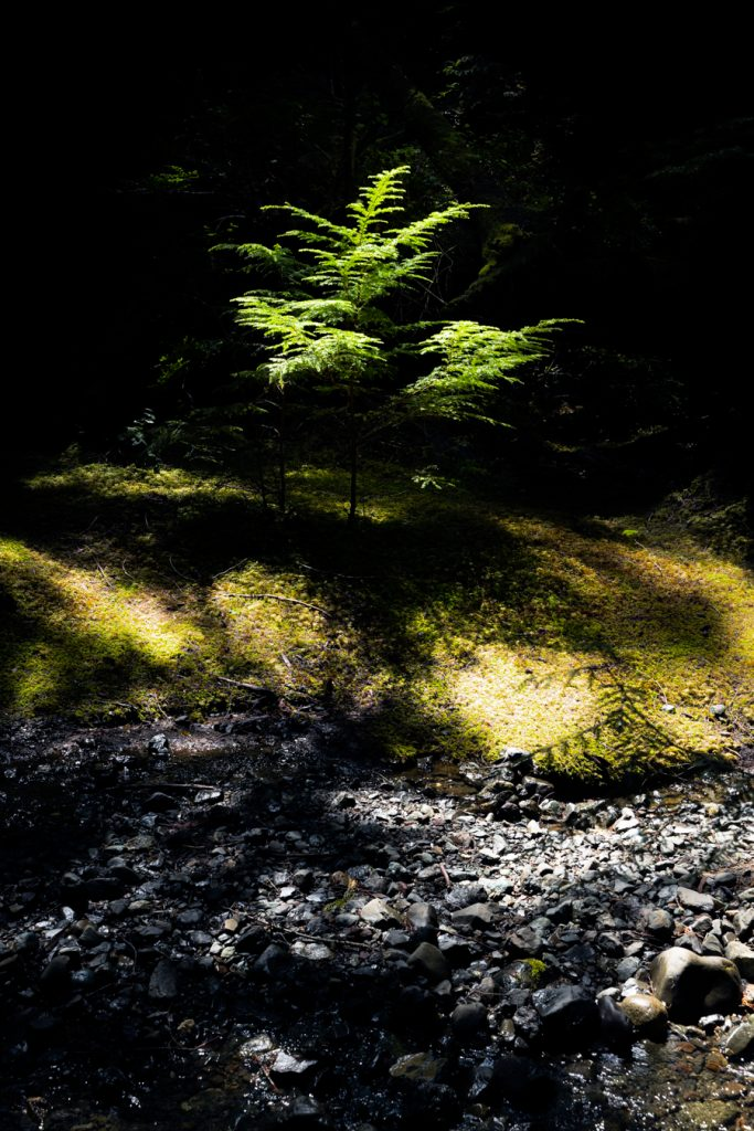Lupin Falls trail vancouver island woodland photography